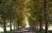 Walk lined with trees
