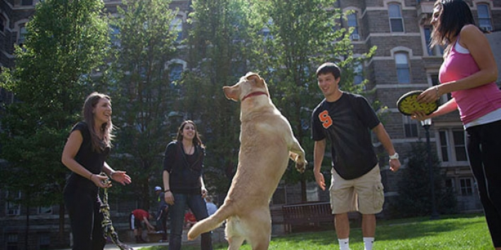Students throwing frisbie as CHC dog jumps in the air to catch