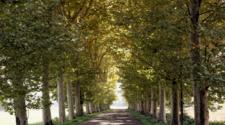 Trees along walkway